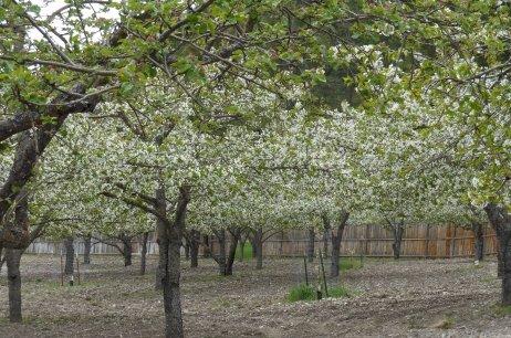Spring 2014 Bloom