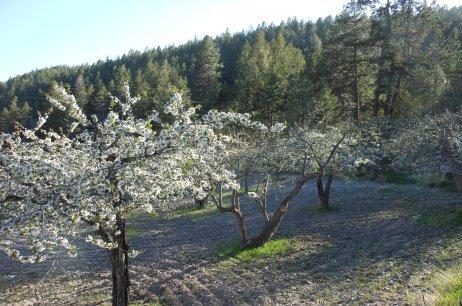 Spring 2013 Bloom